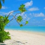 Meeru Island — Stock Photo #5375118