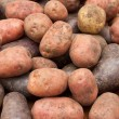 Potatoes — Stock Photo #3925576