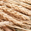 Wheat ears — Stock Photo #3925594