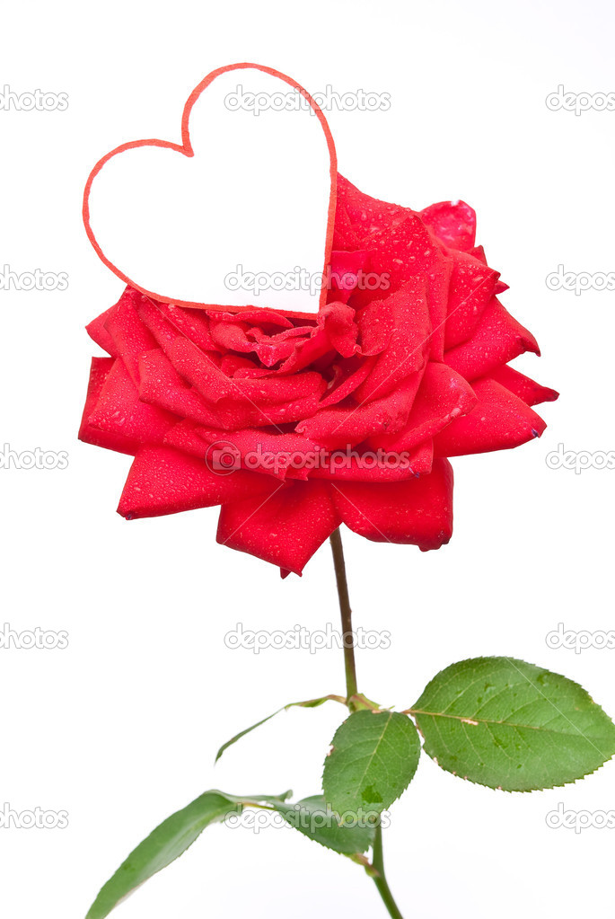 Red rose and heart  — Stock Photo #3925542