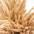Wheat ears — Stock Photo #4014481
