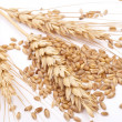Foto Stock: Wheat ears