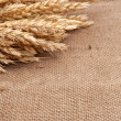 Stock Photo: Wheat ears on burlap background