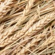 Wheat ears — Stock Photo #4411254
