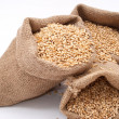 Sacks of wheat grains — Stock Photo