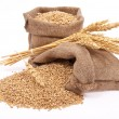 Wheat grains and ears — Stock Photo