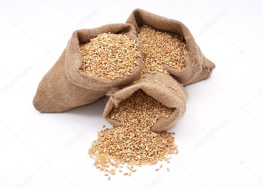 Sacks of wheat grains — Stock Photo © Alexan66 #4666896