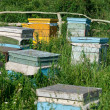 Honey bee hives — 图库照片