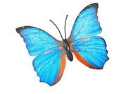 Plastic butterfly — Stock Photo