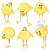Set of chicks — Stock Vector