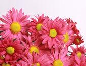 Flowers border — Stock Photo