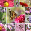 Butterflies and Bees Collage — Stock Photo
