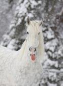 Paard in de winter — Stockfoto