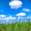 Grass and sky — Stock Photo #4776655