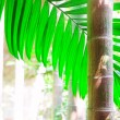 Areca palm — Stock Photo