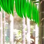 Areca palm — Stock Photo #5216031