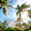 Hammock — Stock Photo