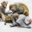 Monkey family - Stockfoto