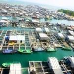 Sea farm — Stock Photo