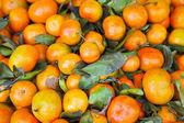 Mandarino — Foto Stock