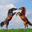 Battle of horses - Stock Photo