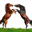 Battle of horses on green field - Stock Photo