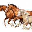 Three horses gallop — Stock Photo