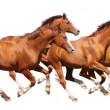 Four sorrel stallion gallop — Stock Photo #5361455