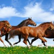 Herd gallops - Stock Photo