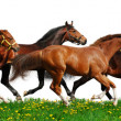 Herd gallops — Stock Photo #5361485