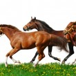 Herd gallops — Stock Photo