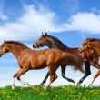 Herd gallops — Stock Photo #5361492