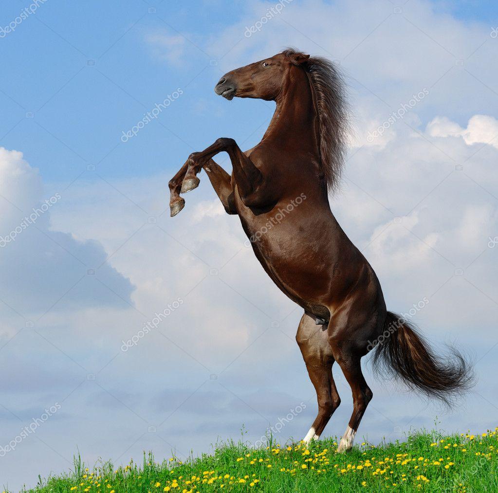 Фото лошади сзади