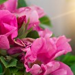 Pink flowers on a bush — Stockfoto