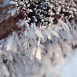 Beautiful frost closeup — Stock Photo