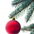 Beautiful toy on a branch of pine - Foto Stock