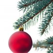 Beautiful toy on a branch of pine - Stock Photo