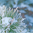 Beautiful details of nature in winter — Stock Photo #4664393