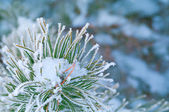 Beautiful details of nature in winter — Stock Photo