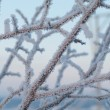 Frost on the trees — Stock Photo