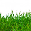 Real green grass for your background — Stock Photo #4837575