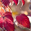 Stock Photo: Red nature at winter
