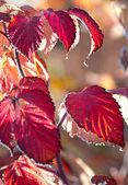 Red nature at winter — Stock Photo
