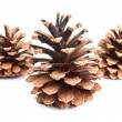 Pine cones — Stock Photo #4146197