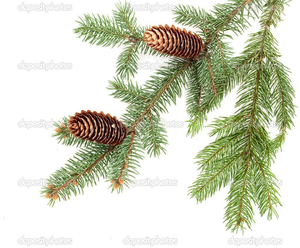 Christmas decoration on white background — Photo #4224770