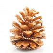 Gold pine cones — Stock Photo #4268941