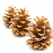 Stock Photo: Gold pine cones