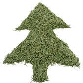 Green tree of the needles — Stock Photo