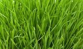 Jarní grass textury — Stock fotografie