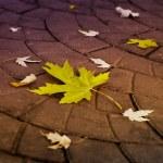 The fall — Stock Photo